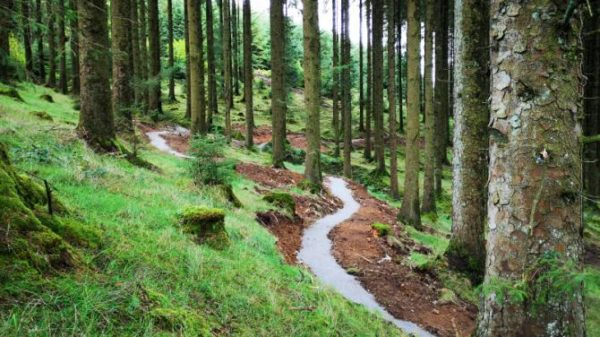 Slieve Bloom cycling trails